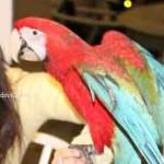 Large Birds (Macaw, Suplur Crested Cockatoo)