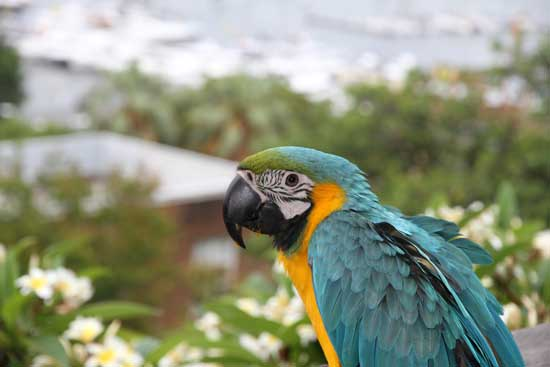 12 month old Blue and Gold Macaw enjoying the veiw