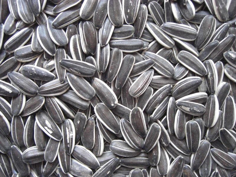Cockatiel Seed | Birdsville