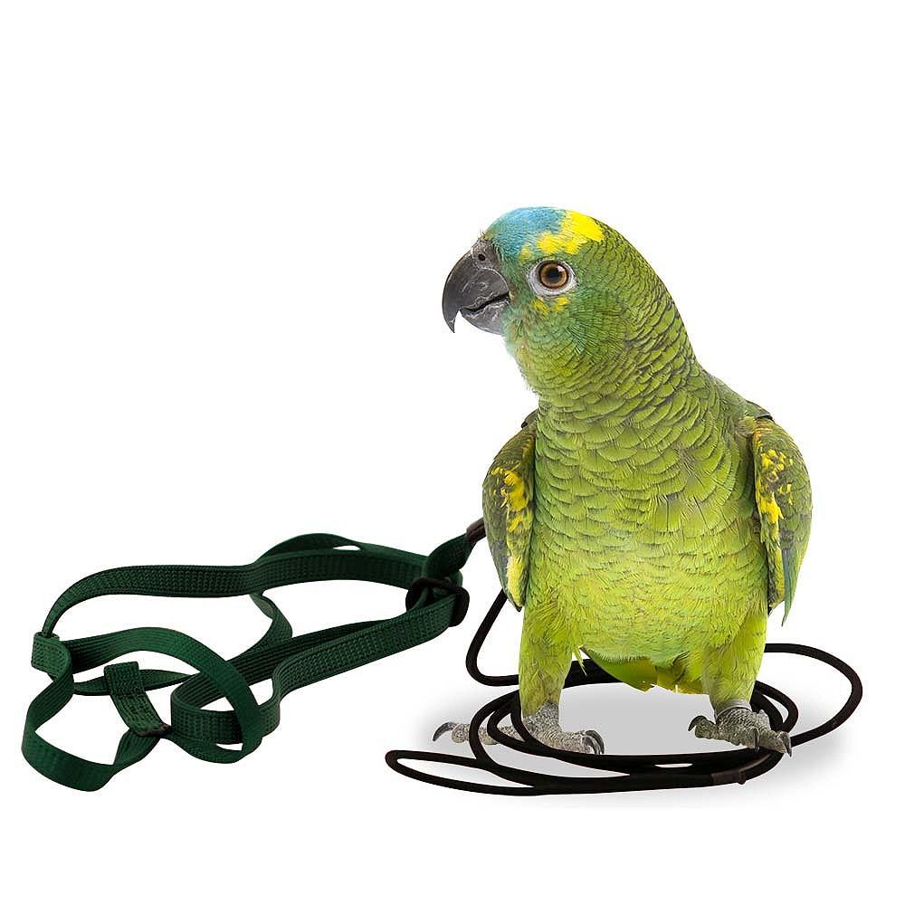 The Aviator Harness & Lead - Birdsville Bird Shop, Sydney