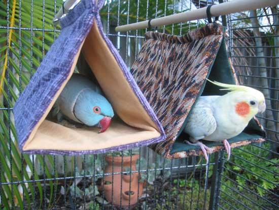 Bird Bunks