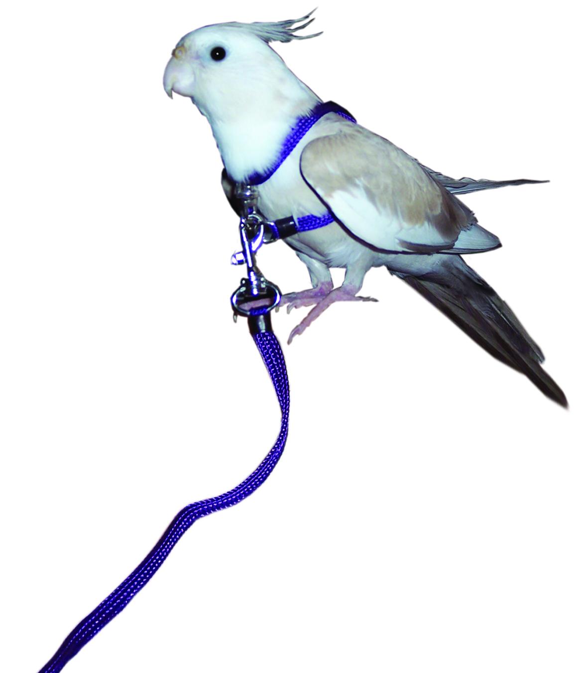 McDonald Bird Harness & Lead   Birdsville