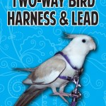McDonald Bird Harness & Lead